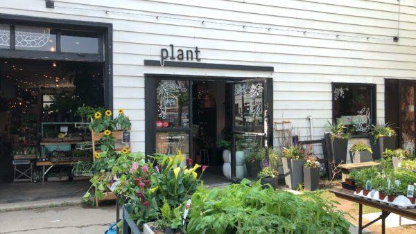 Inglewood Neighbourhood Spotlight: Plant