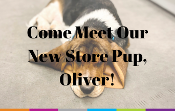 Meet our new store pup